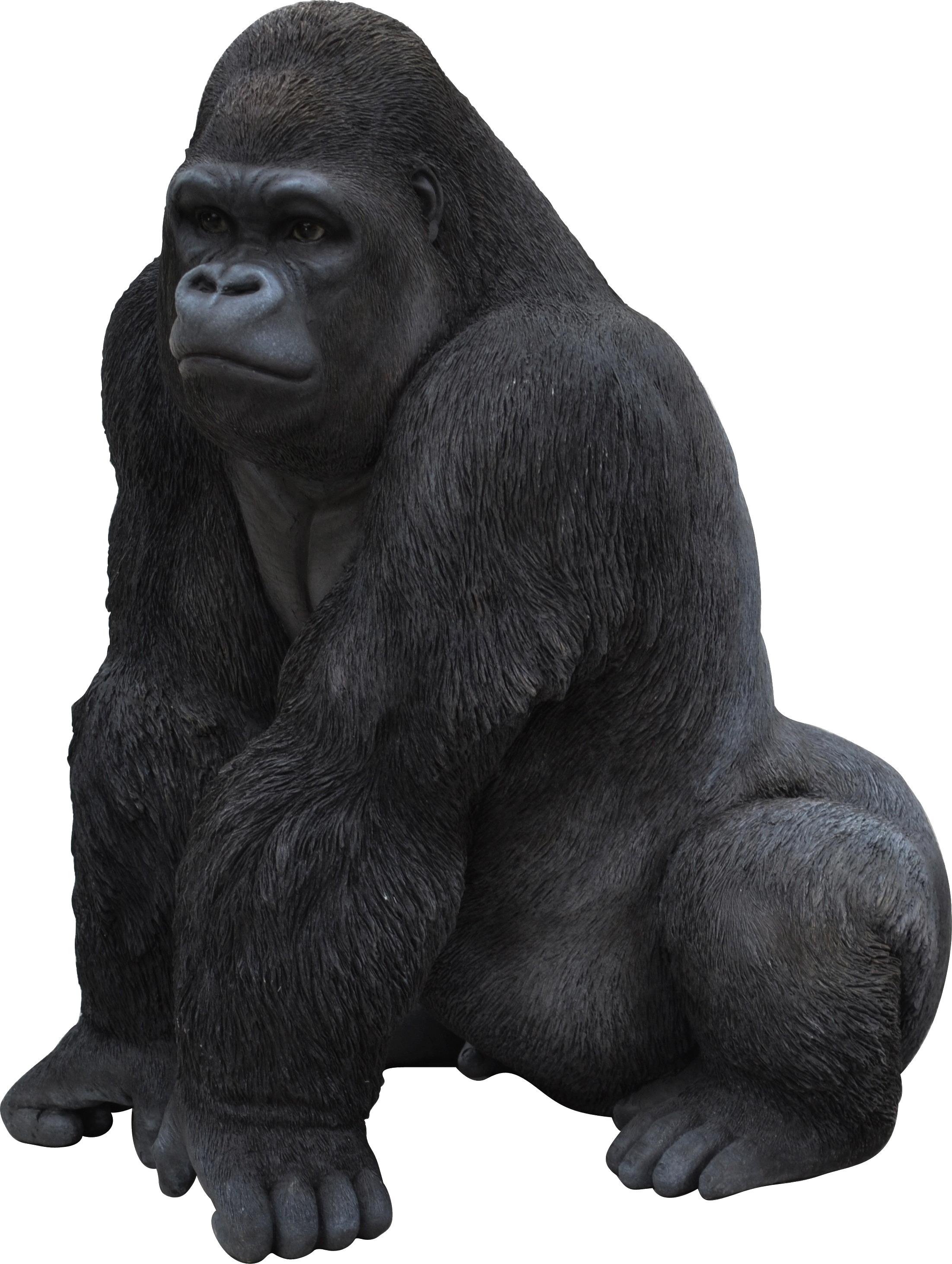 Gorilla PNG - Free Gorilla PNG