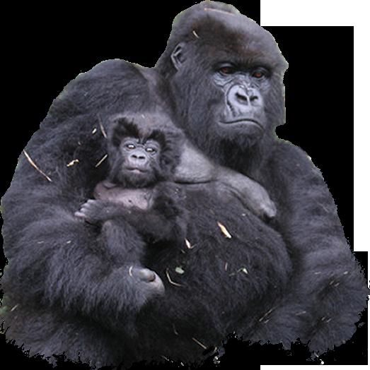 Gorilla PNG Clipart - Free Gorilla PNG