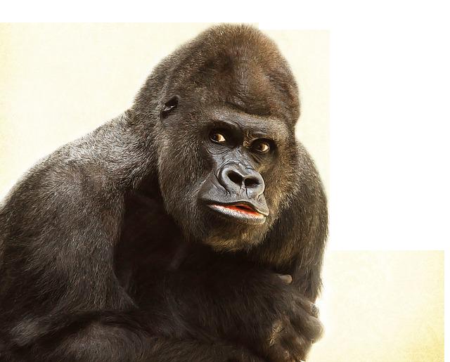 Gorilla PNG File - Free Gorilla PNG