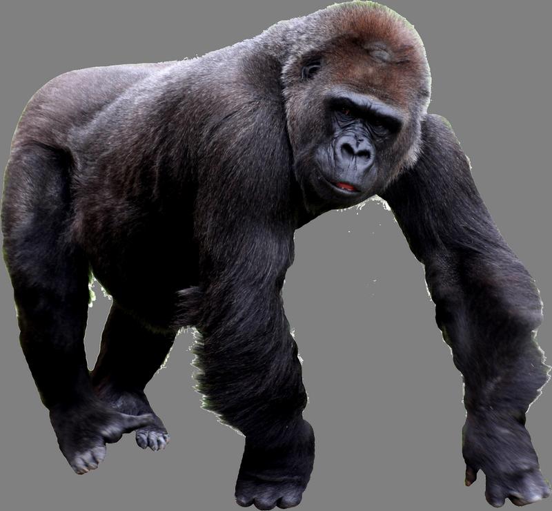 Gorilla Png image #37869 - Free Gorilla PNG