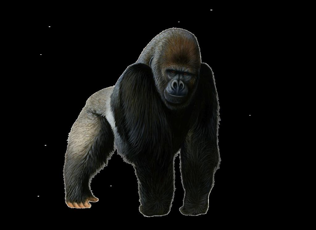 Gorilla Png Pic PNG Image - Free Gorilla PNG