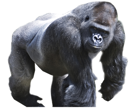 Gorilla PNG Picture - Free Gorilla PNG