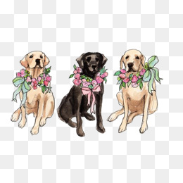 labrador, Golden, Animal, Pet PNG Image and Clipart - Free Labrador Retriever PNG