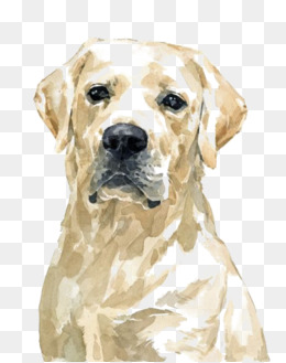 watercolor golden retriever dog, Hand-painted Puppy, Cartoon Puppy, Pet Dog  PNG - Free Labrador Retriever PNG