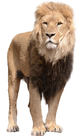 Lion PNG - Free Lion PNG HD