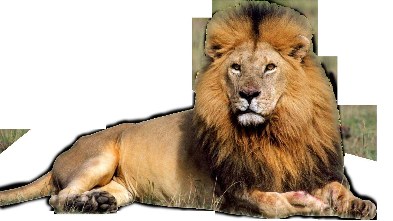 Free Lion PNG HD  - 128248