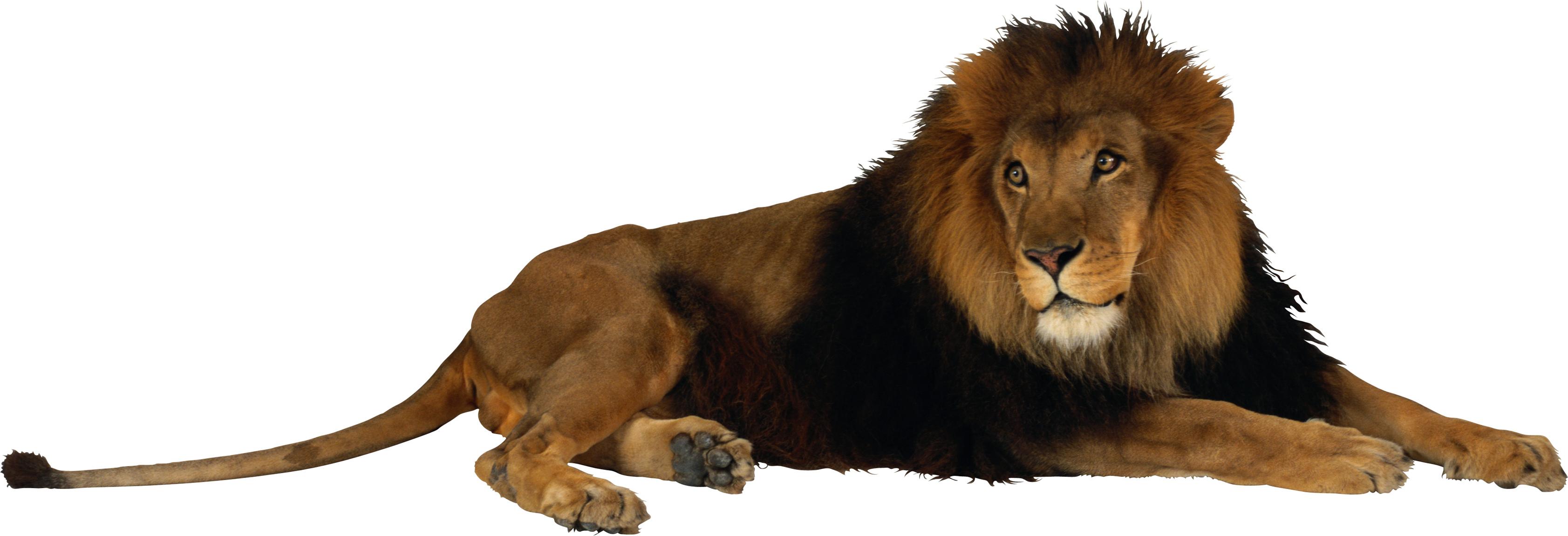 Free Lion PNG HD  - 128252