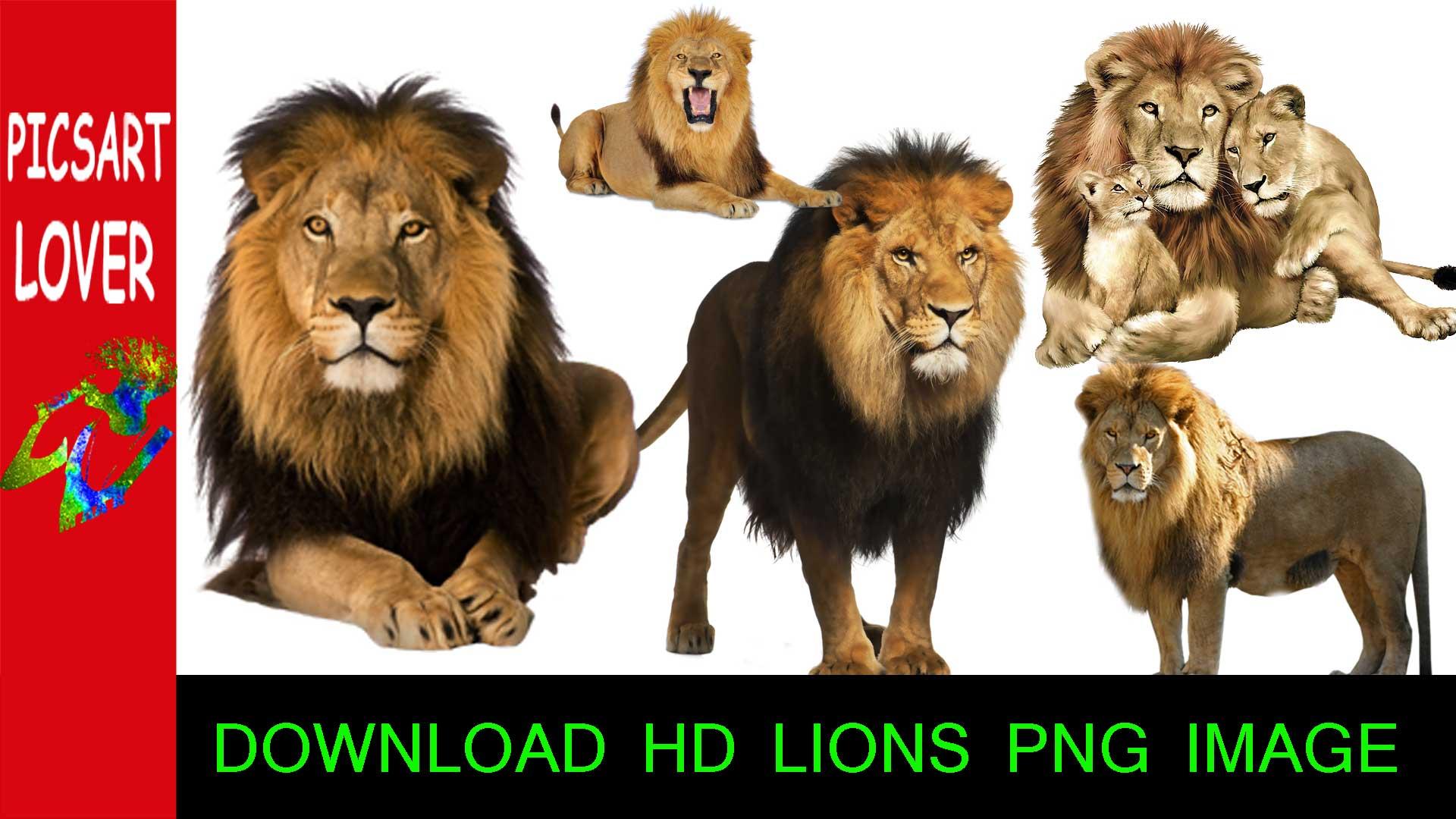 Free Lion PNG HD  - 128255