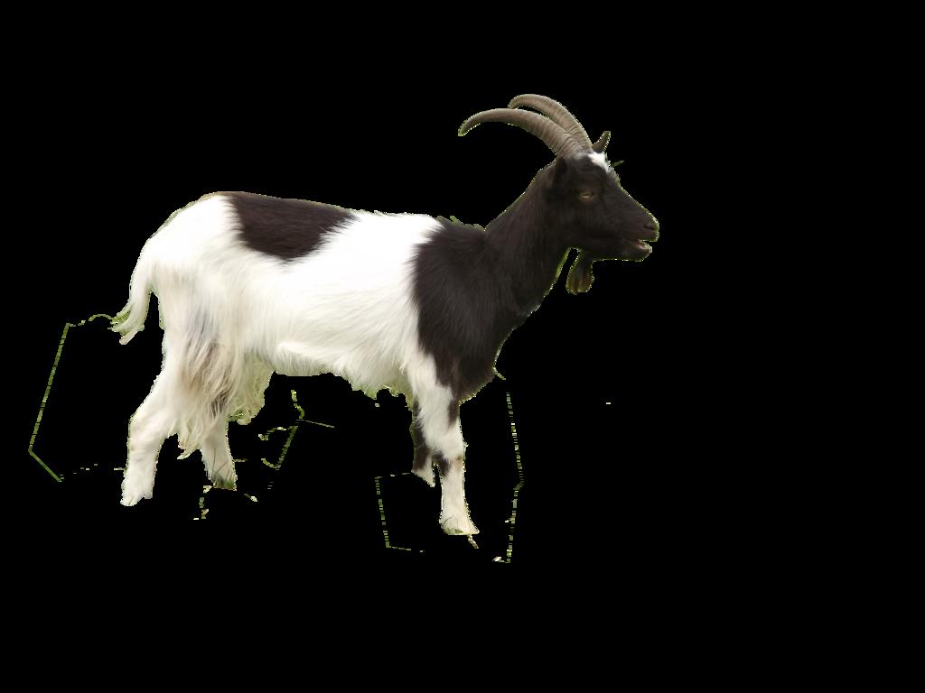 Free PNG Goat - 53092