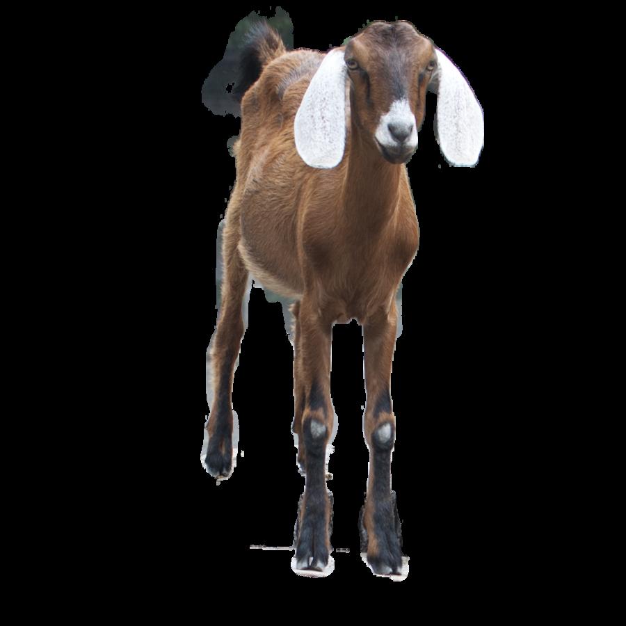 Free PNG Goat - 53105