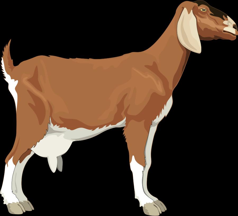 Free PNG Goat - 53096