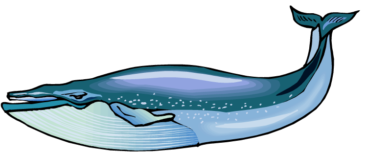 Blue Whale PNG HD - Free PNG HD For March