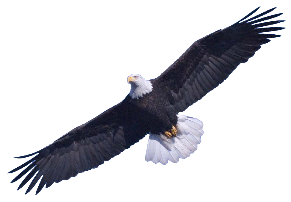 Bald Eagle Free Download Png PNG Image - Free PNG HD Of Eagles