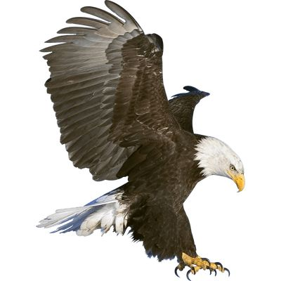 Eagle Claws - Free PNG HD Of Eagles