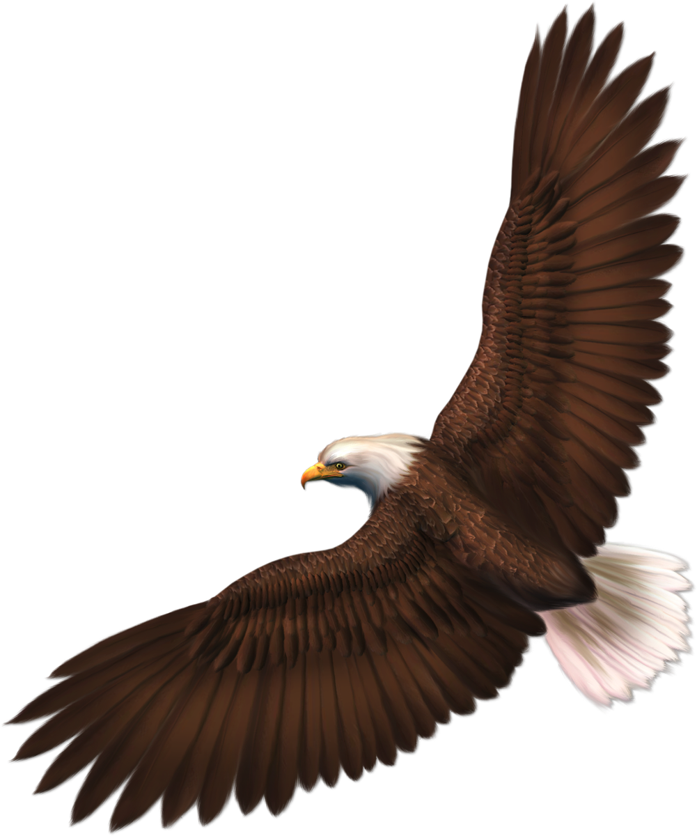 Eagle Format: PNG image with alpha (transparent) Resolution: 1001x1200  Size: 774 - Free PNG HD Of Eagles
