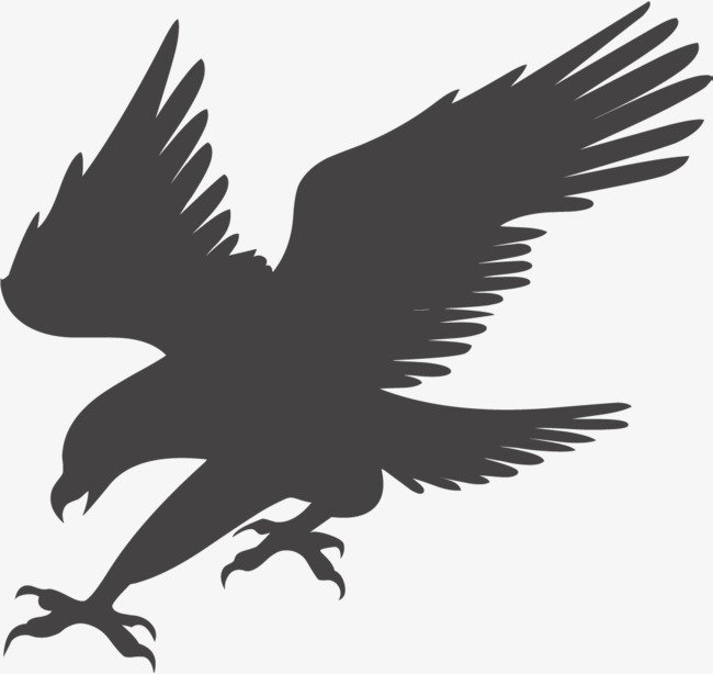 eagle hunting, Eagle Soaring, Fly High, Eagles Fly PNG and Vector - Free PNG HD Of Eagles