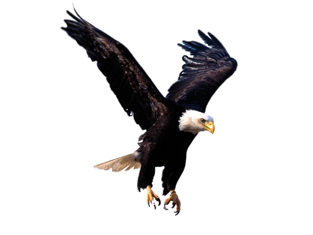 PNG HD Of Eagles