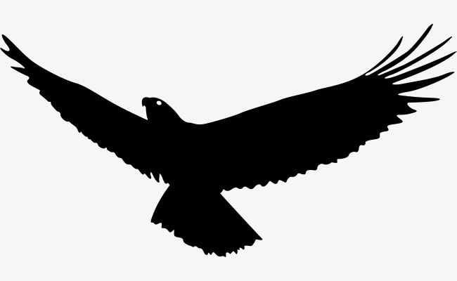 Eagle wings, Eagle Soaring, Fly High, Eagles Fly PNG and Vector - Free PNG HD Of Eagles