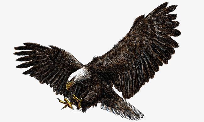 Flying Eagles, Eagle, Asuka, Animal World PNG and Vector - Free PNG HD Of Eagles