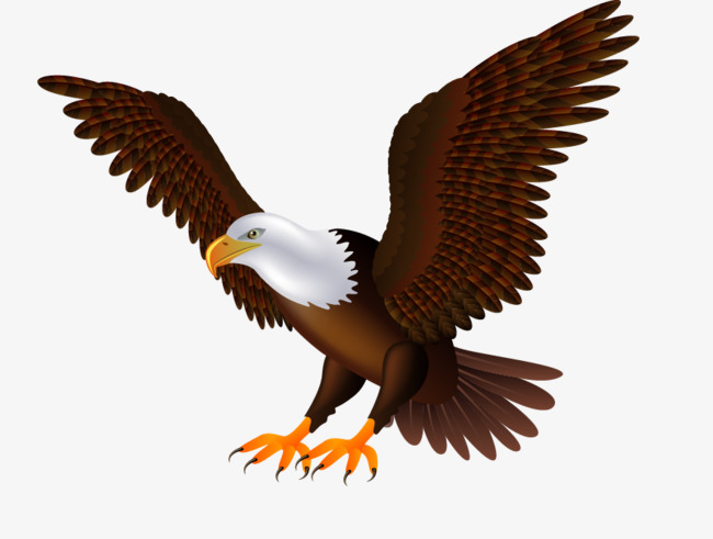 Flying Eagles, Eagle, Eagle Wings, Birds PNG and Vector - Free PNG HD Of Eagles