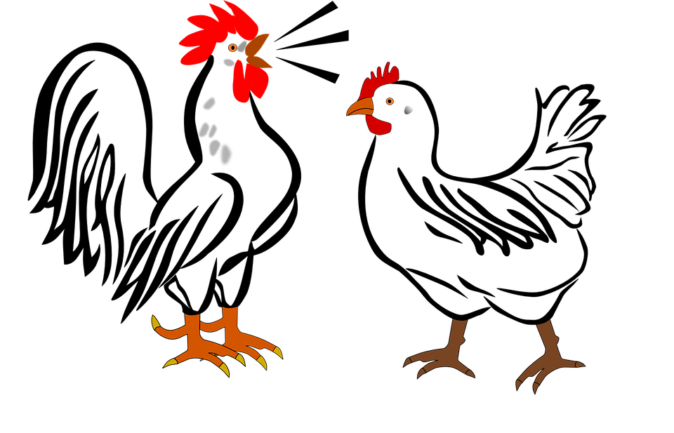 Rooster, Hen, Farm, Animals, Birds, Chicken, Poultry - Free PNG Hen