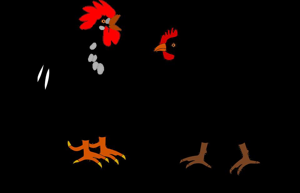Rooster, Hen, Farm, Animals,
