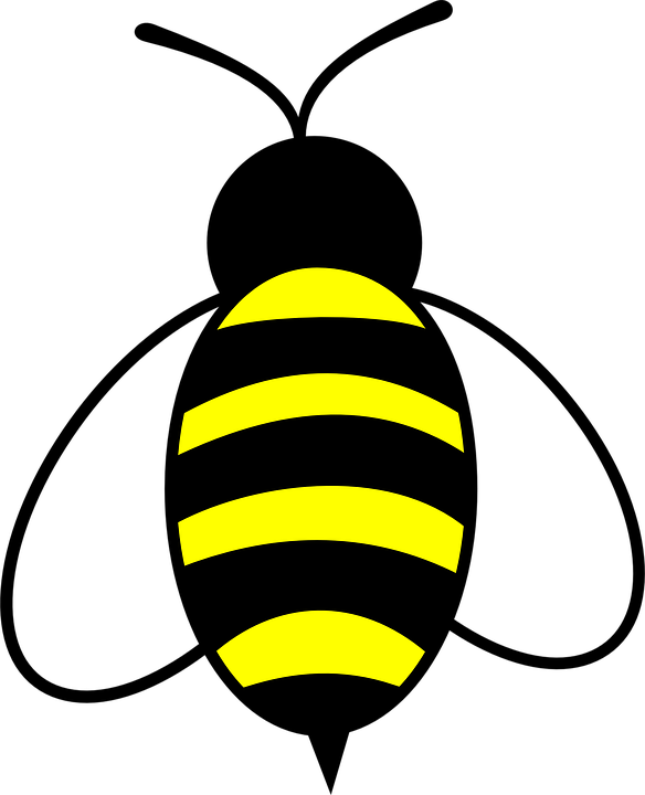 Honey, Bee, Bug, Insect, Buzz, Yellow - Free PNG Honey Bee