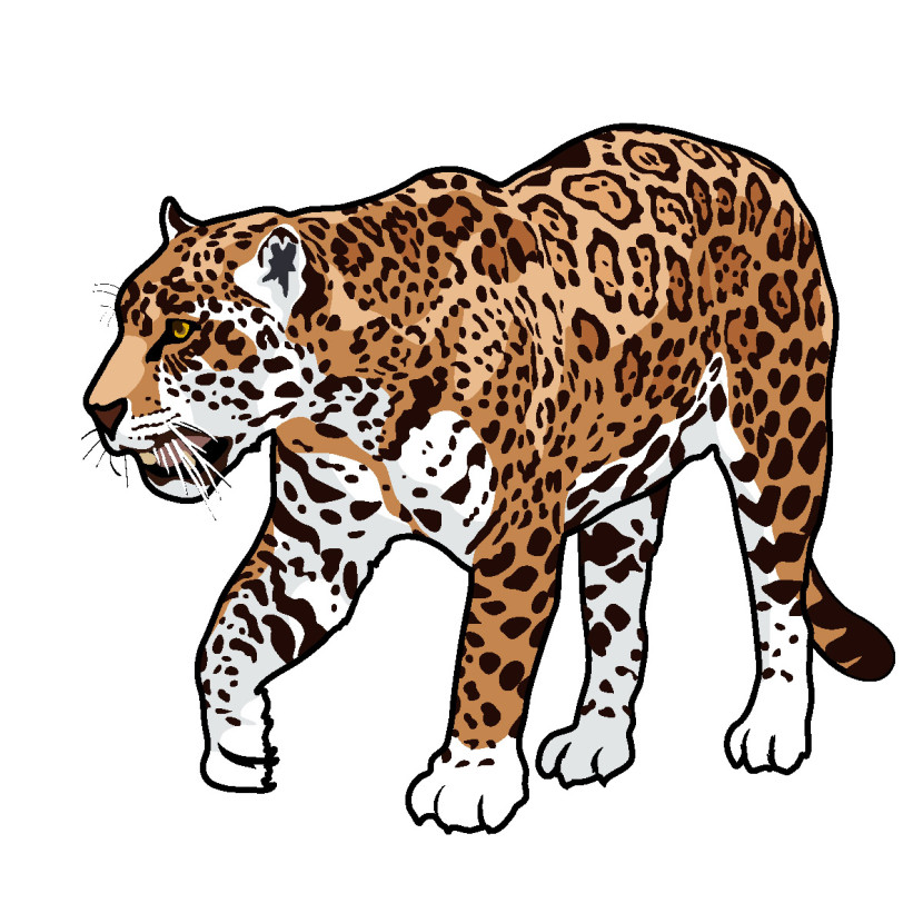 Jaguar Animal Cartoon Clipart Free Clip Art Images - Free PNG Jaguar