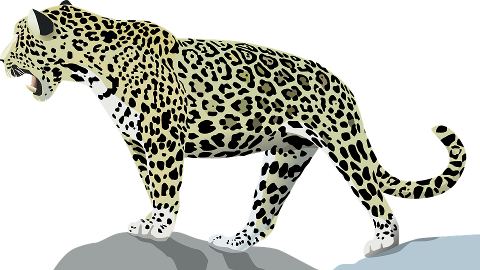 Jaguar, Animal, Cat, Wild, PlusPng.com  - Free PNG Jaguar
