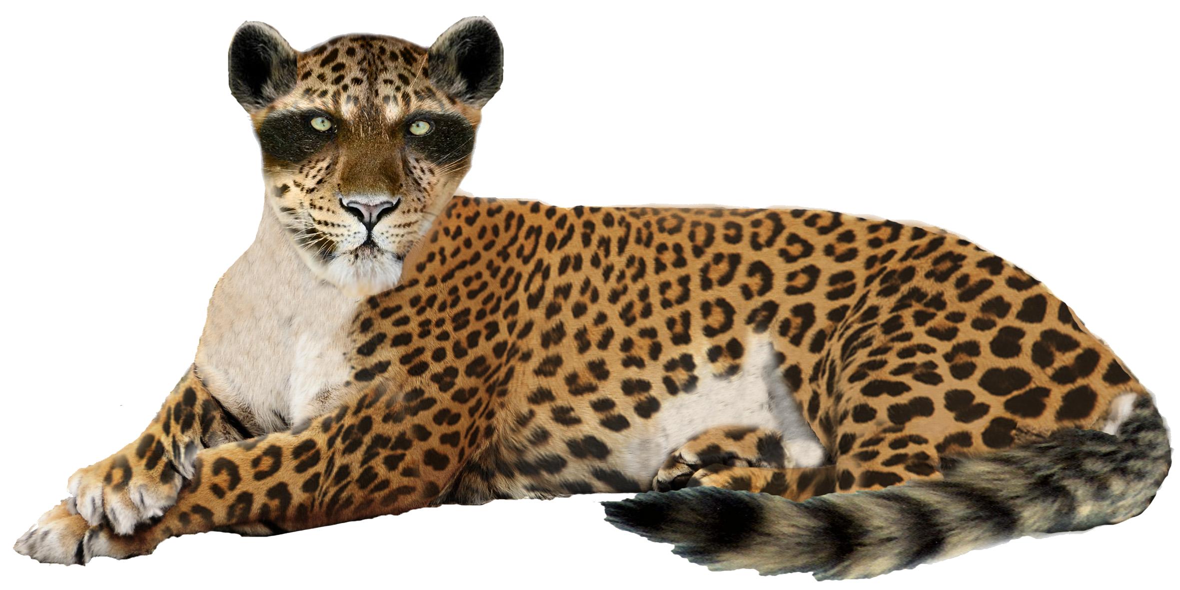 Leopard PNG Image - Free PNG Jaguar