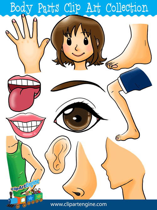 Our Body Parts Clip Art Collection is a set of royalty free graphics that  includes a - Free PNG Of Body Parts