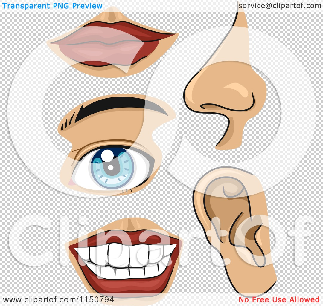 PNG file has a PlusPng.com  - Free PNG Of Body Parts