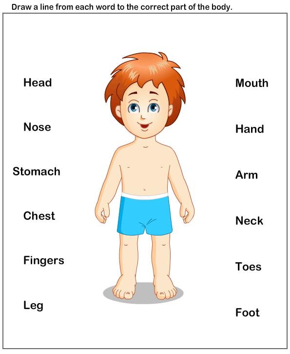 science Worksheets - preschool Worksheets - Body Parts Worksheets - Free PNG Of Body Parts