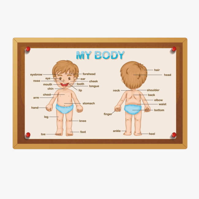 vector boy body, Child, Doll, Body Parts PNG and Vector - Free PNG Of Body Parts