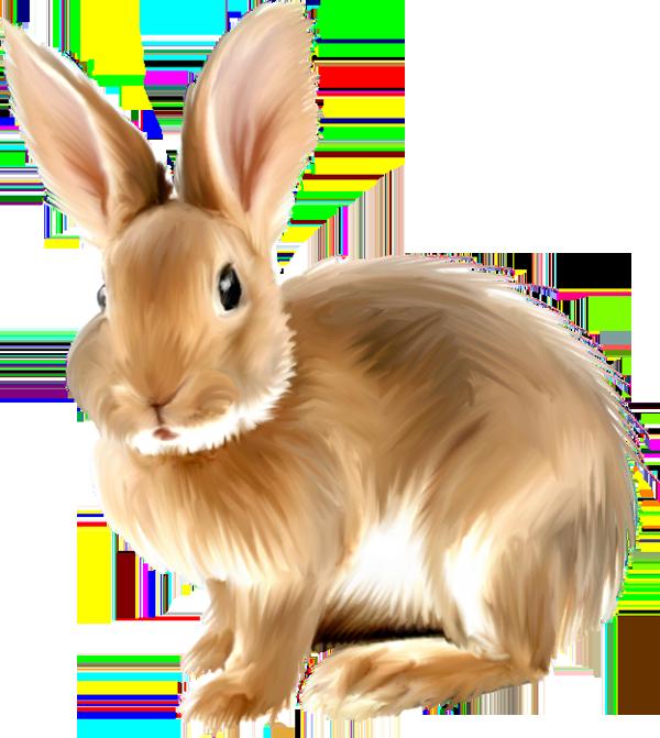 PNG Rabbits Bunnies