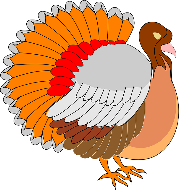 Free vector graphic: View, Thanksgiving, Turkey, Bird - Free Image on  Pixabay - 48562 - Turkey Bird PNG