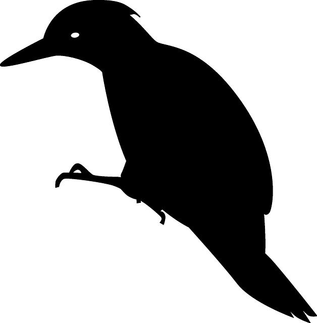Free vector graphic: Woodpecker, Animal, Bird, Black - Free Image on  Pixabay - 159482 - Woodpecker PNG
