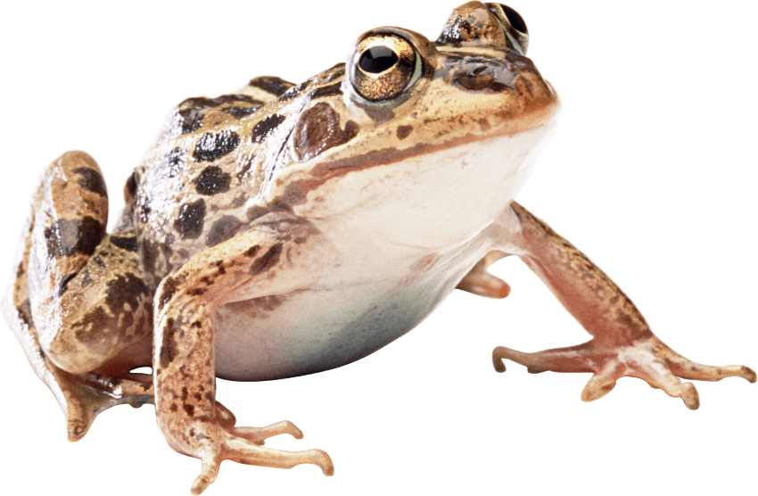 free png frog PNG images transparent - Frog And Toad PNG