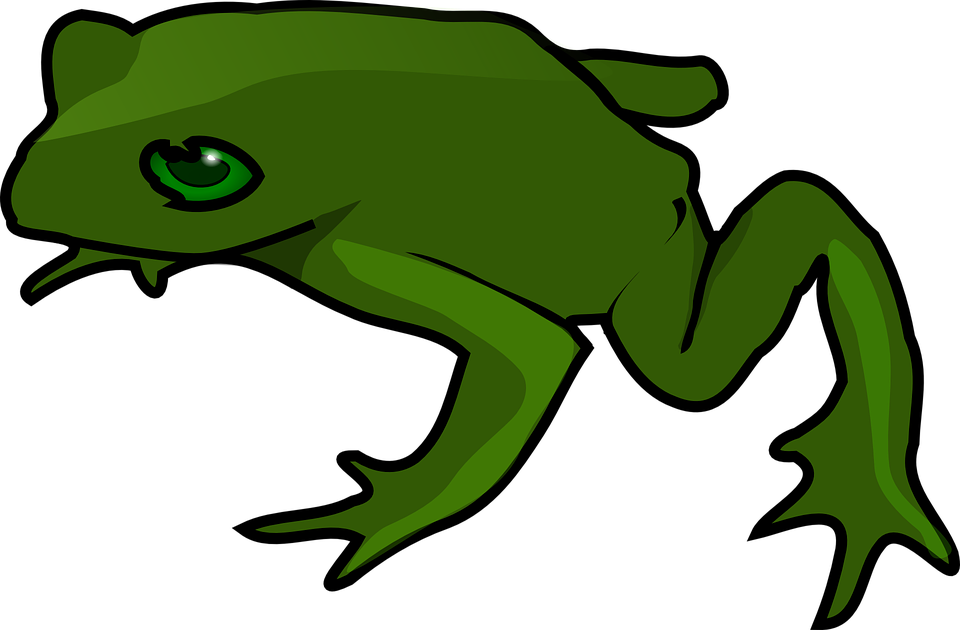frog green amphibian toad land water wildlife - Frog And Toad PNG