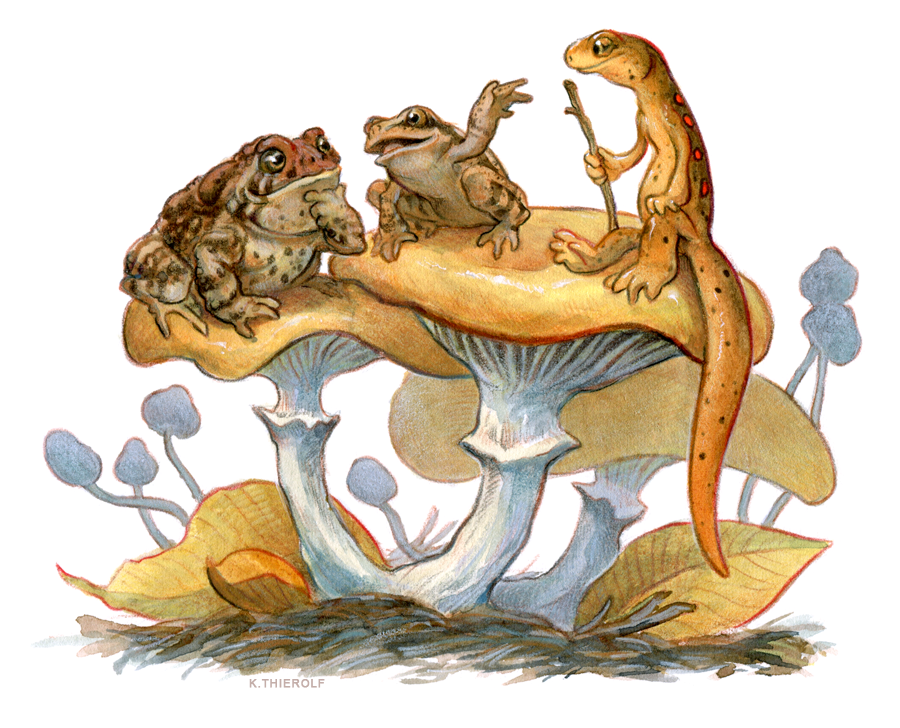 Newt Moot 5: Frog and Toad by Rowkey PlusPng.com  - Frog And Toad PNG