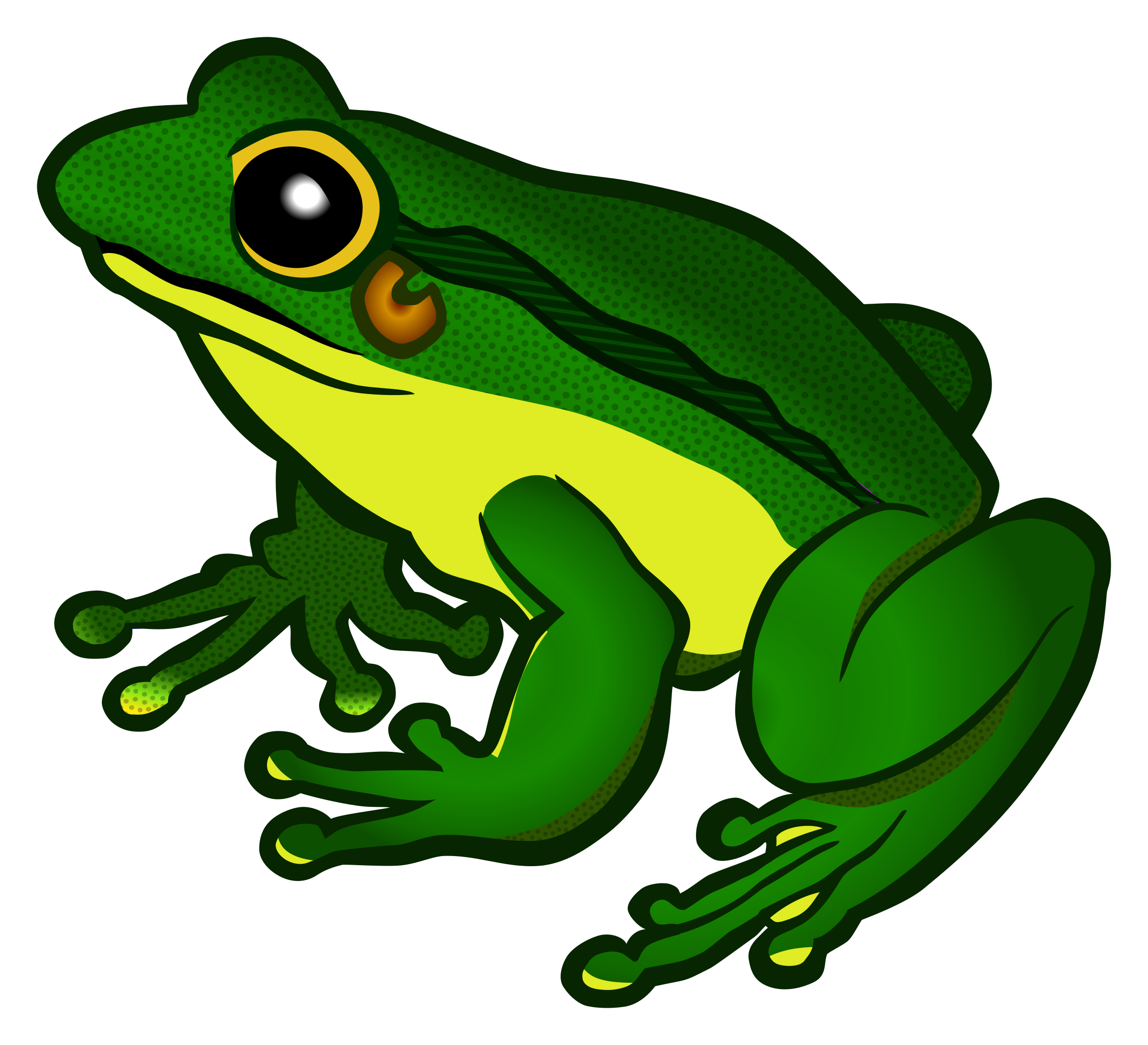 Frog Transparent Background - Frog PNG - Frog PNG HD