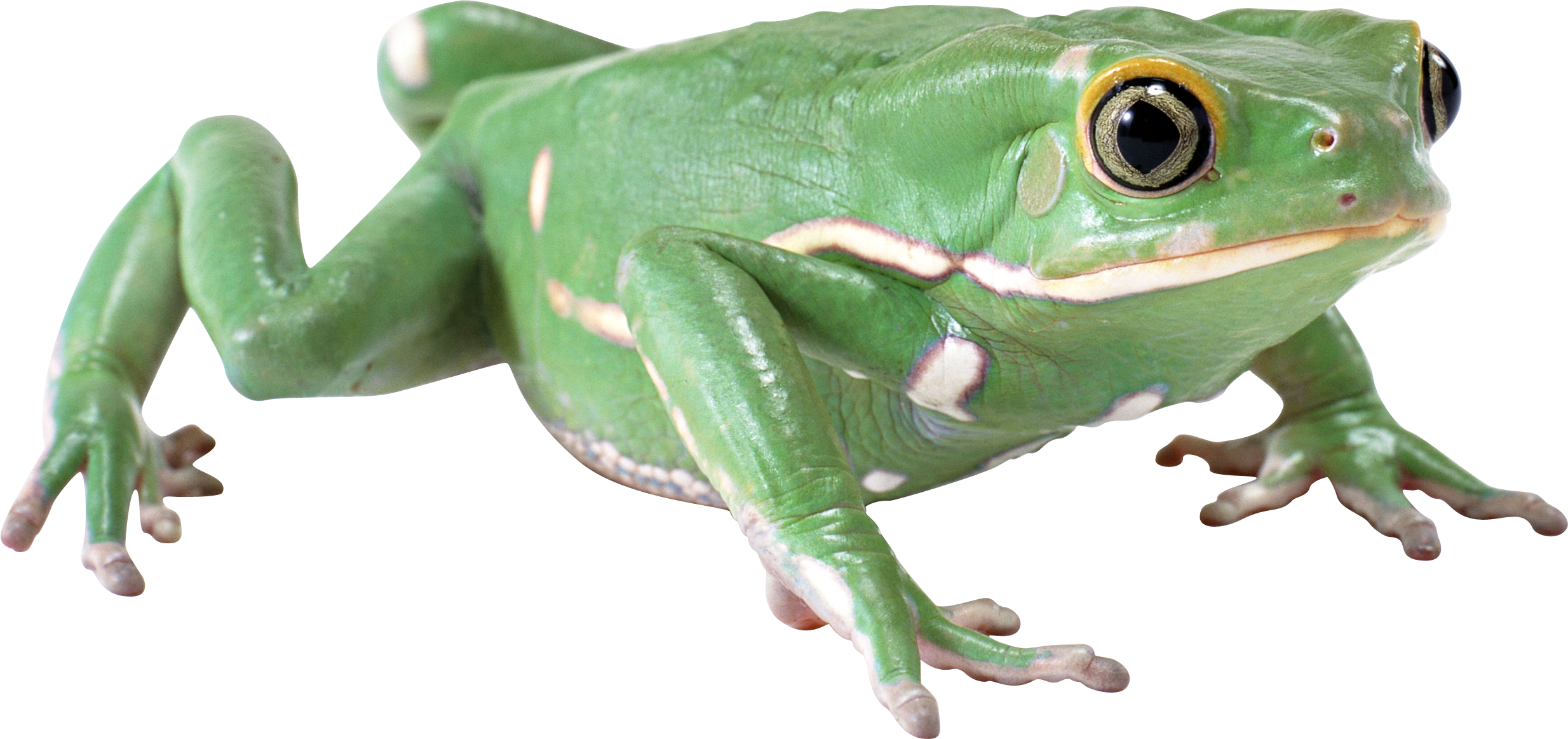 Green frog PNG - Frog PNG HD