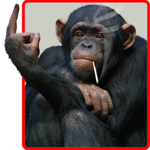 Funny Monkey Live Wallpaper - Funny Monkey PNG HD