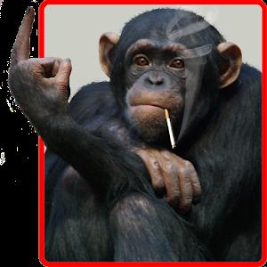 Funny Monkey Live Wallpaper - Funny Monkey PNG HD