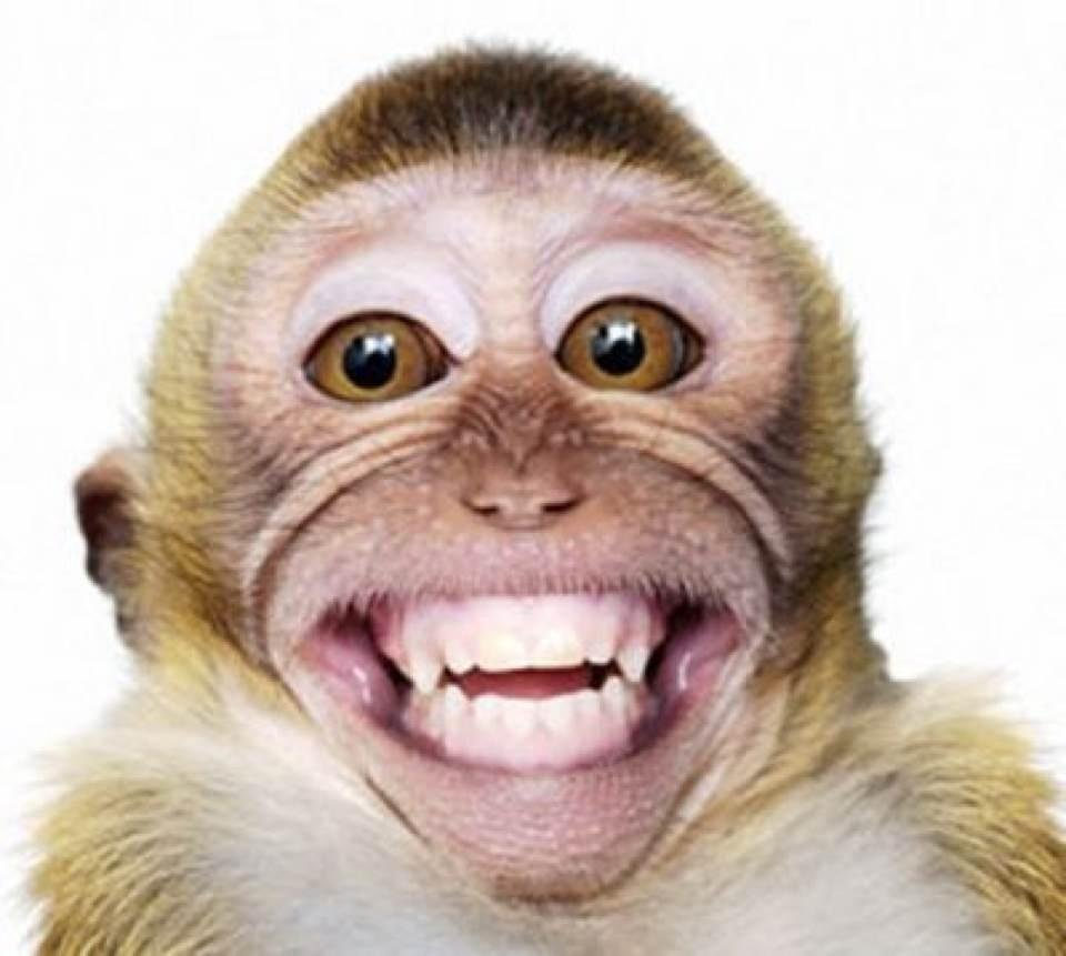 Funny Monkey Smiling Face Image - Funny Monkey PNG HD