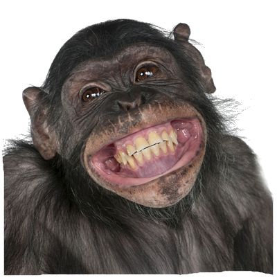 Funny Monkey PNG HD