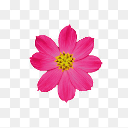 flowers, Plant, Flowers, Fuchsia PNG Image and Clipart - Fuschia Flowers PNG