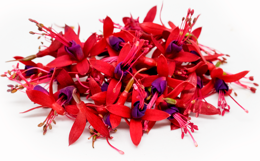 Micro Fuchsia™ Flowers - Fuschia Flowers PNG