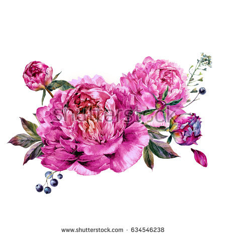 Watercolor Floral Decoration made of Fuchsia Peonies, Buds and Foliage.  Botanical Illustration in Vintage - Fuschia Flowers PNG