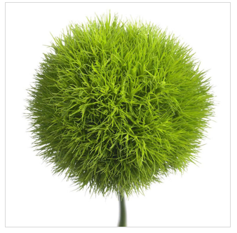 Flower arrangements - Fuzzy Ball PNG